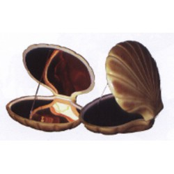 COQUILLE ST JACQUES MIROIR OR